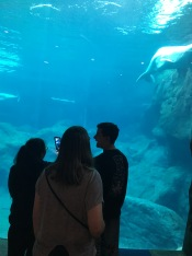 inside Georgia Aquarium; Nada Abdalla, Lily Fleischer, Ethan Selko
