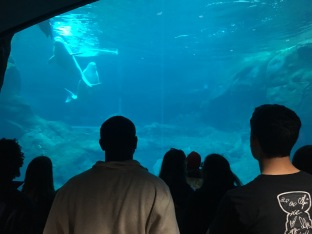 inside Georgia Aquarium
